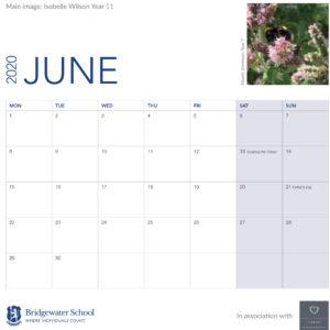 2020 Woodland Calendar June support image