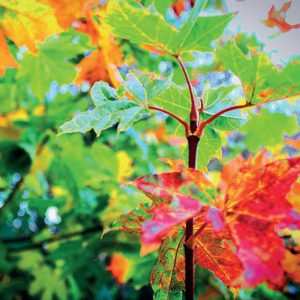 2020 Woodland Calendar September main image