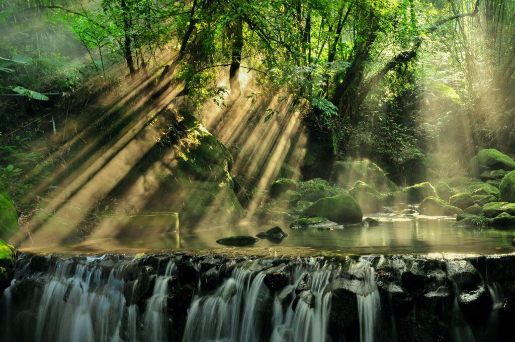Imagine a rainforest